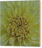 Vivid Yellow Dahlia Wood Print
