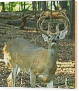 Vocal 10 Point 9544 4378 Wood Print
