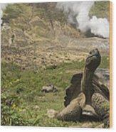 Volcan Alcedo Giant Tortoise Geochelone Wood Print