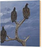 Vultures Perched On A Branch No.0022 Wood Print