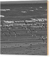 Wading Birds In Flight V4 Wood Print