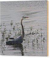 Wading Blue Heron - Ardea Herodias Wood Print