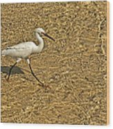 Wading For A Meal Wood Print