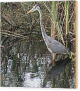 Wading Great Blue Heron Wood Print