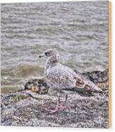 Waiting Gull Wood Print