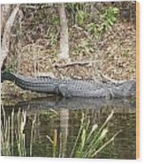 Wakulla Springs Alligator Wood Print