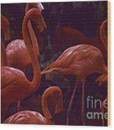 Walking Flamingos Wood Print