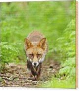 Walking Fox Wood Print