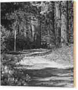 Walking In The Springtime Woods In Black And White Wood Print