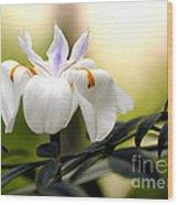 Walking Iris Flower Wood Print