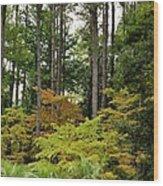 Walking Through An Autumn Garden Wood Print