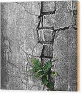 Wall Ferns Wood Print