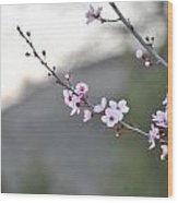 Walnut Creek Blossoms Wood Print
