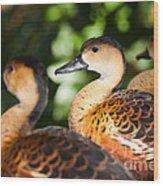 Wandering Whistling Ducks Wood Print