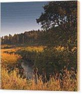 Warm Morning Sun. The Trossachs National Park. Scotland Wood Print