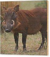 Warthog Wood Print