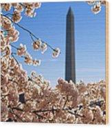 Washington Monument Cherry Trees Wood Print