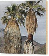 Washingtonia Filifera Fan Palms Wood Print
