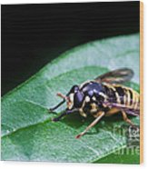 Wasp Break Wood Print