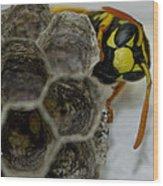 Wasp Nest Wood Print by Dean Bennett