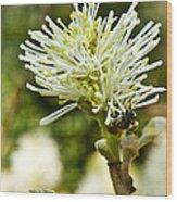 Wasp On Fothergilla 1 Wood Print