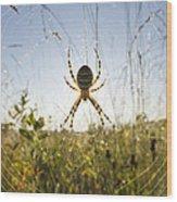 Wasp Spider Argiope Bruennichi In Web Wood Print