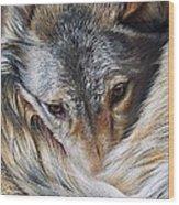 Watchful Rest -close-up Detail Wood Print by Elena Kolotusha