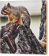 Watchful Squirrel Wood Print
