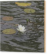 Water Circles On The Lily Pond Wood Print