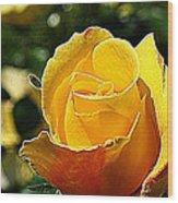 Water Color Paper Rose Wood Print