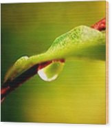 Water Drop Abstract Wood Print