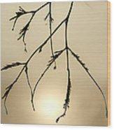 Water Droplets Wood Print