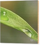 Water Droplets On A Lily Leaf Wood Print