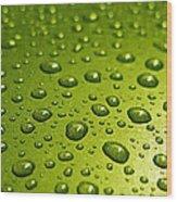 Green Card. Macro Photography Series Wood Print