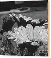 Water Drops On Flowers Wood Print