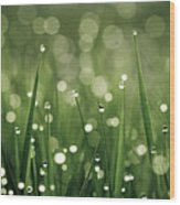 Water Drops On Grass Wood Print