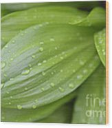 Water Drops On Green Leaf Wood Print