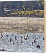 Water Fowl At Lake Wilhelmina Arkansas Wood Print