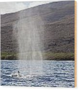 Water From A Whale Blowhole Wood Print