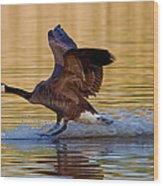 Water Landing Wood Print