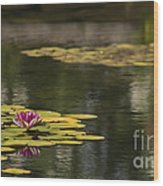 Water Lilies And Lily Pads Wood Print