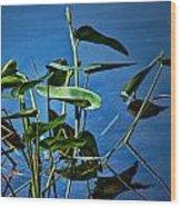 Water Lilies No.098 Wood Print