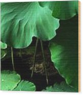 Water Lilies Of Green Wood Print