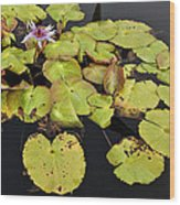 Water Lillies And Pads Wood Print