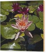 Water Lilly 6 Wood Print