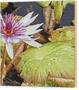 Water Lilly Close Up Wood Print