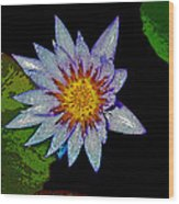 Water Lilly Paint Wood Print