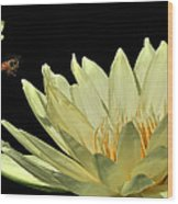 water lily 3 Yellow Water Lily with Bee Wood Print