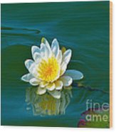 Water Lily 4 Wood Print by Julie Palencia