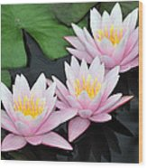 water lily 88 Sunny Pink Water Lily with Reflection Wood Print